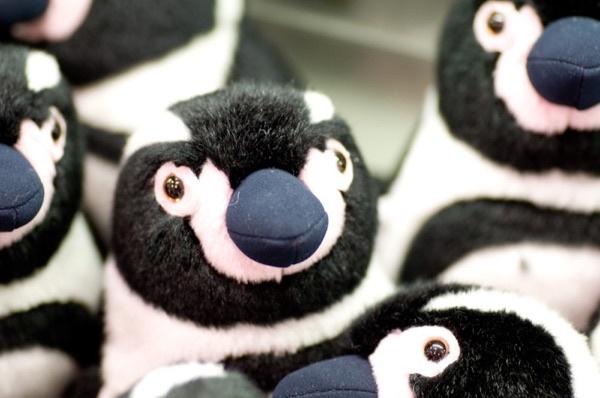 サロンのホームページに使うペンギン